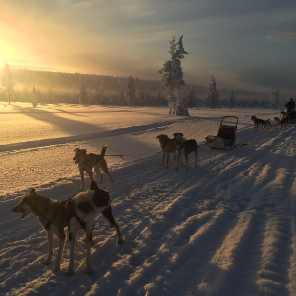 Husky Safari in Ivalo